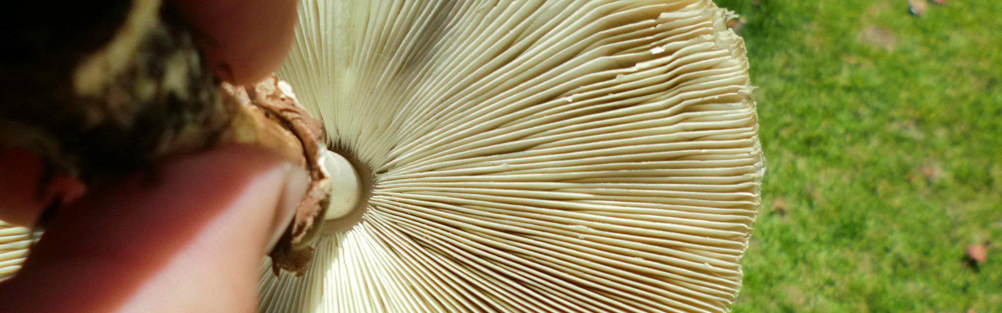 Smyth Mycology